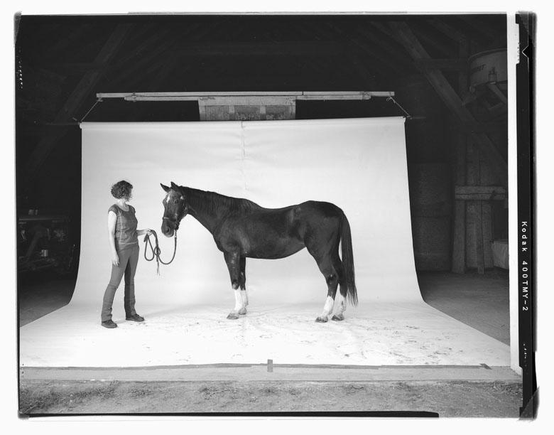 Pferdestudio Horse-Studio